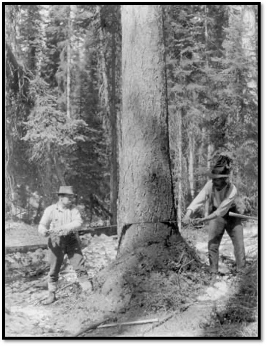 Photo United States Department of Agriculture - Forest Service