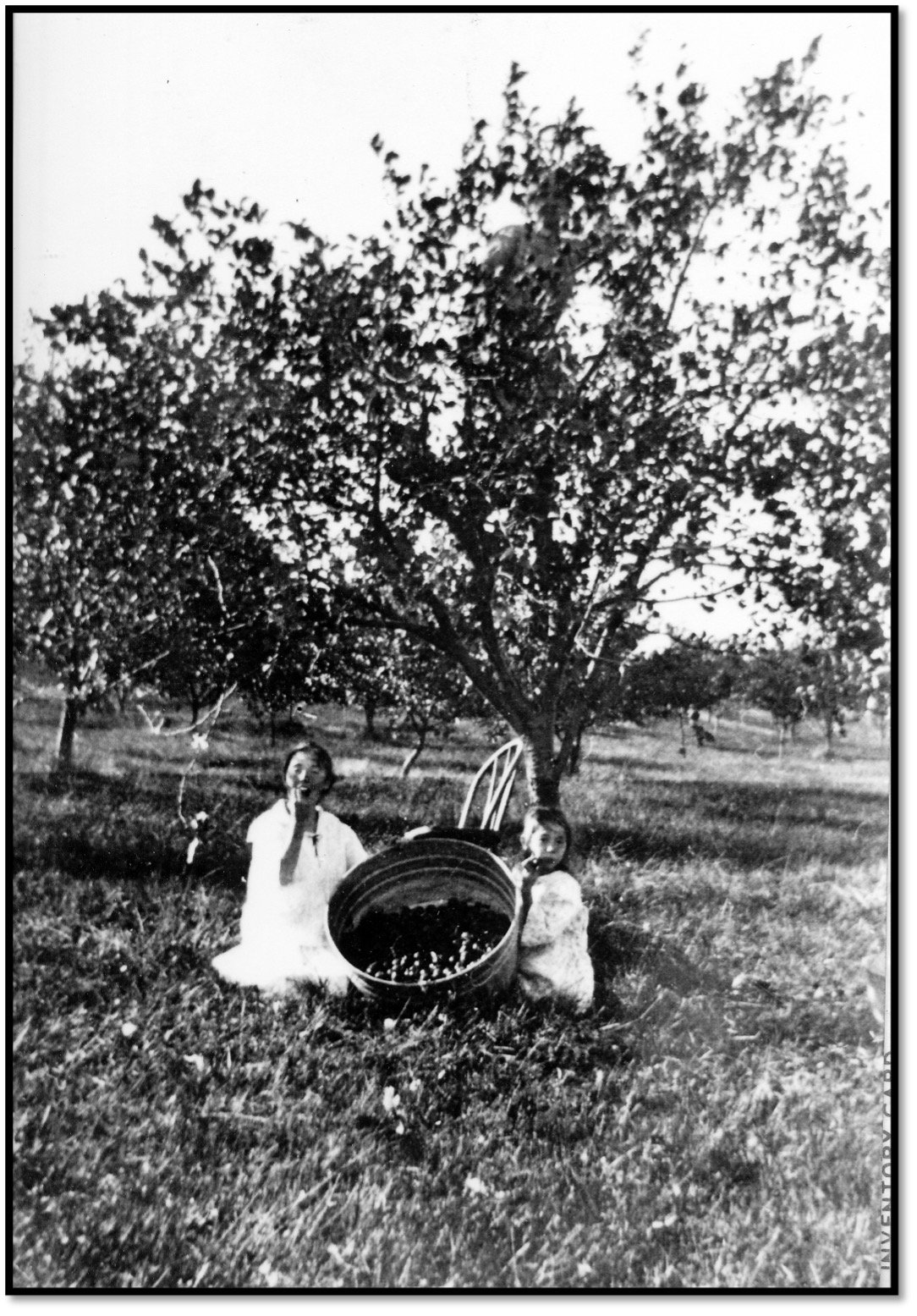 Children with Tub of Apples Burt Hill Orchard Sand Island WI NPSIIDIC 1910c11