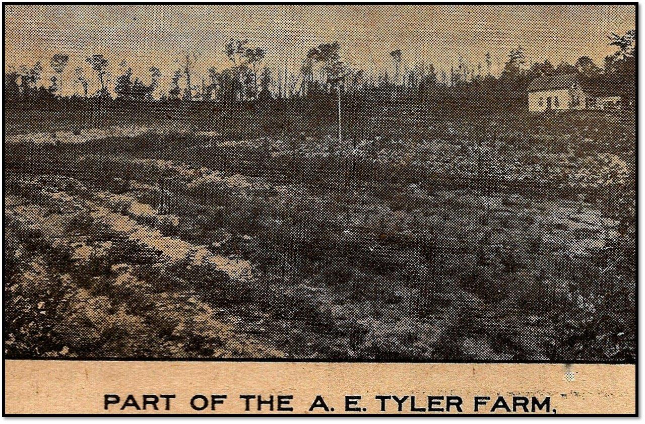 AE Tyler Farm Bayfield Progress September 30 1909
