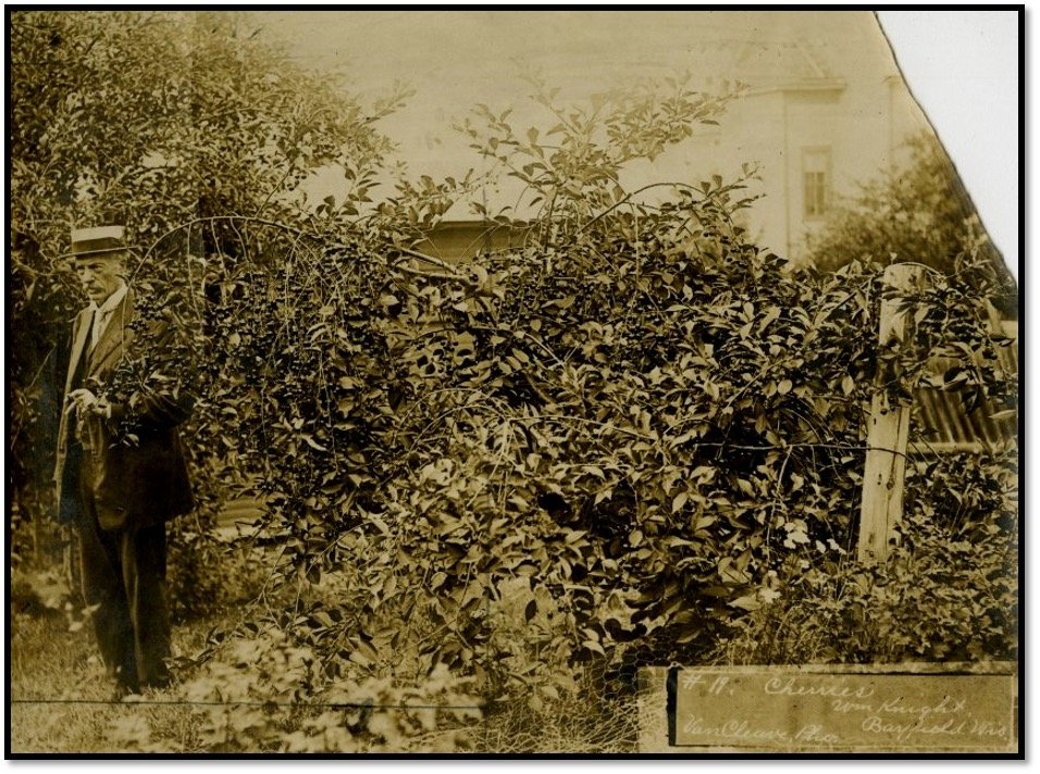 William Knights Cherry Orchard at the Summit Farm Henry Van Cleave Bayfield WI BHA 1991.200.4.001