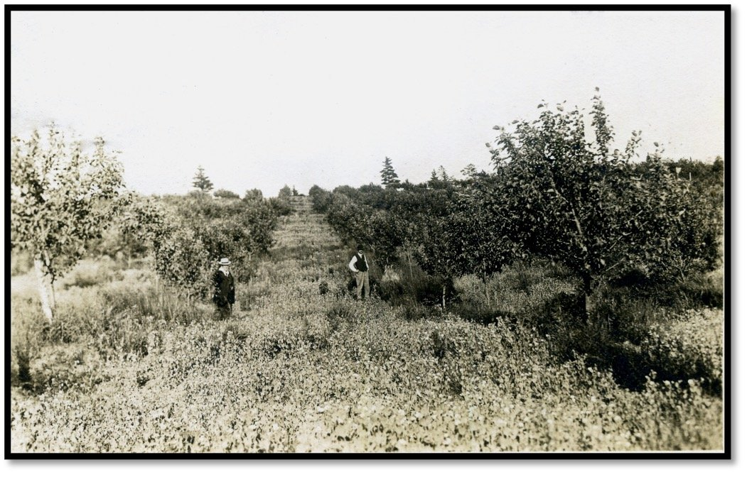 William Knight and one of his early Orchards ca 1915