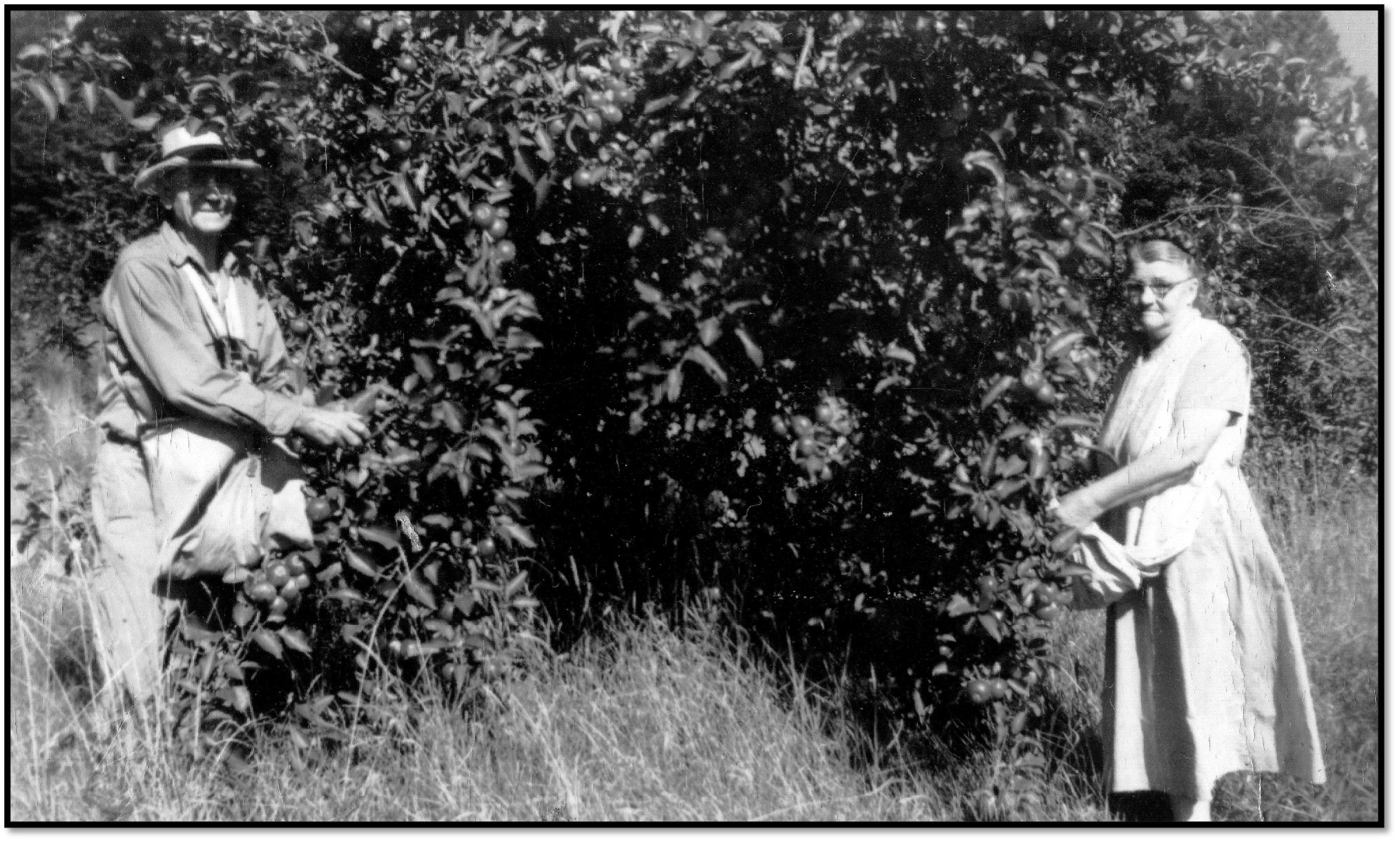 Martin and Christine Erickson picking Cortland apples on the old Erickson farm ca 1960s