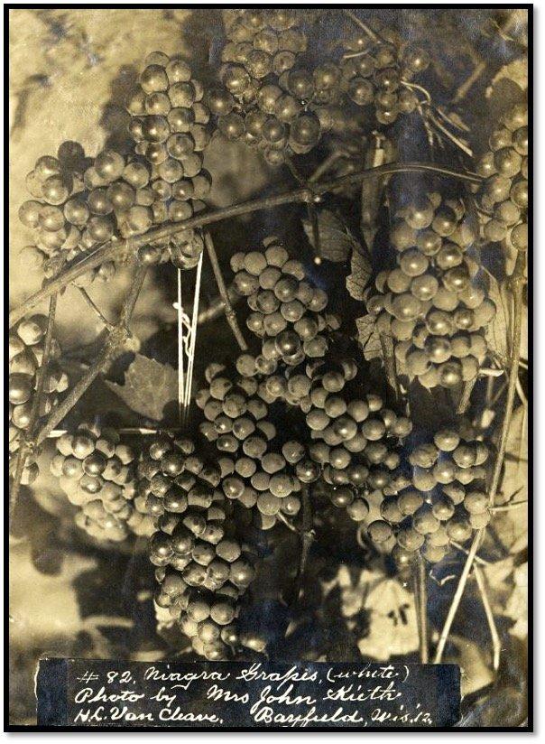 Nathan Carver Grapes