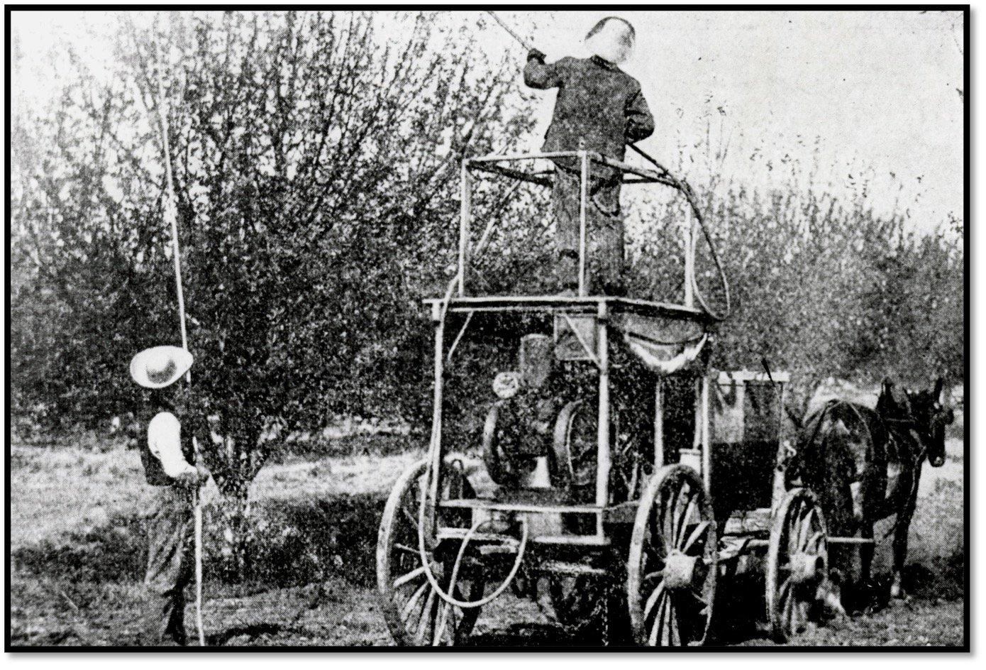 Spraying the Bordeaux chemical mixture on the Cultivars BHA 1980.1.35