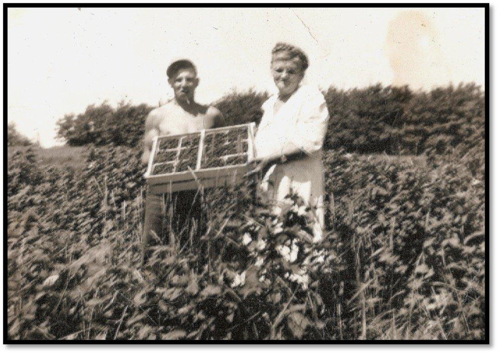 Jim Erickson and Grandmother Christine Erickson in the Erickson orchard and farm Raspberry patch ca 1956